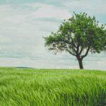 Tree in green wheat field by Johann Siemens on Unsplash